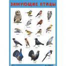 Плакат Зимующие птицы 0883-7