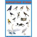 Плакат Перелетные птицы  882-0