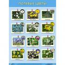Плакат. Полевые цветы 835-6