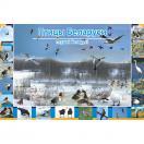 Птицы Беларуси. Плакат