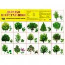 Демонстрационный плакат Деревья и кустарники, А-2