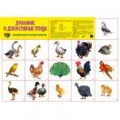 Демонстрационный плакат Домашние и декоративные птицы, А-2