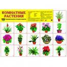 Демонстрационный плакат Комнатные растения, А-2