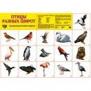 Демонстрационный плакат Птицы разных широт, А-2