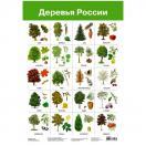 Плакат. Деревья России 2883