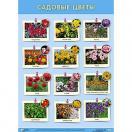 Плакат Садовые цветы
