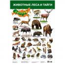 Плакат. Животные леса и тайги  2687