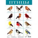 Плакат Птицы 2088