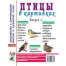 Птицы в картинках