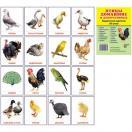 Птицы домашние и декоративные.16 раздаточных карточек с текстом
