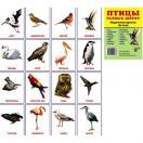 Птицы разных широт.16 раздаточных карточек с текстом